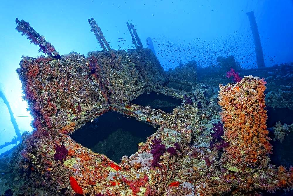Overgrown shipwreck of the Numidia, sunken 20.07.1901, Red Sea, Big Brother Island, Brother Islands, El Alkhawein, Egypt, Africa