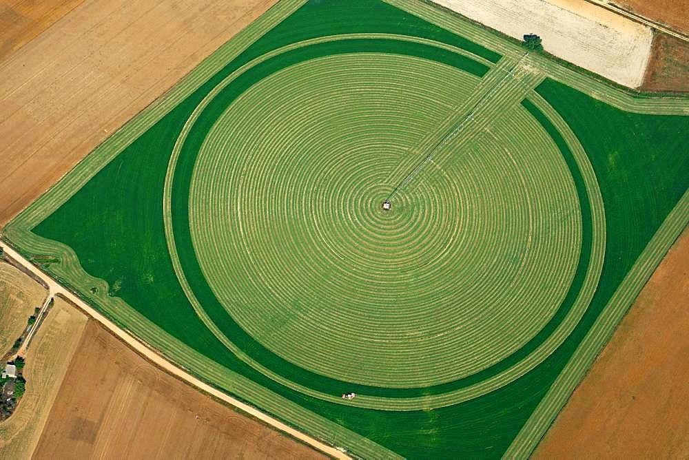 Almost mown round field, green fodder, aerial view, Segovia, Spain, Europe