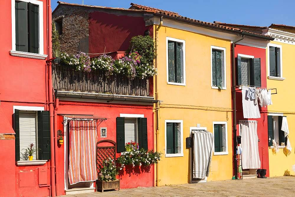 Colourful red and yellow houses, Burano Island, Venice, Veneto, Italy, Europe