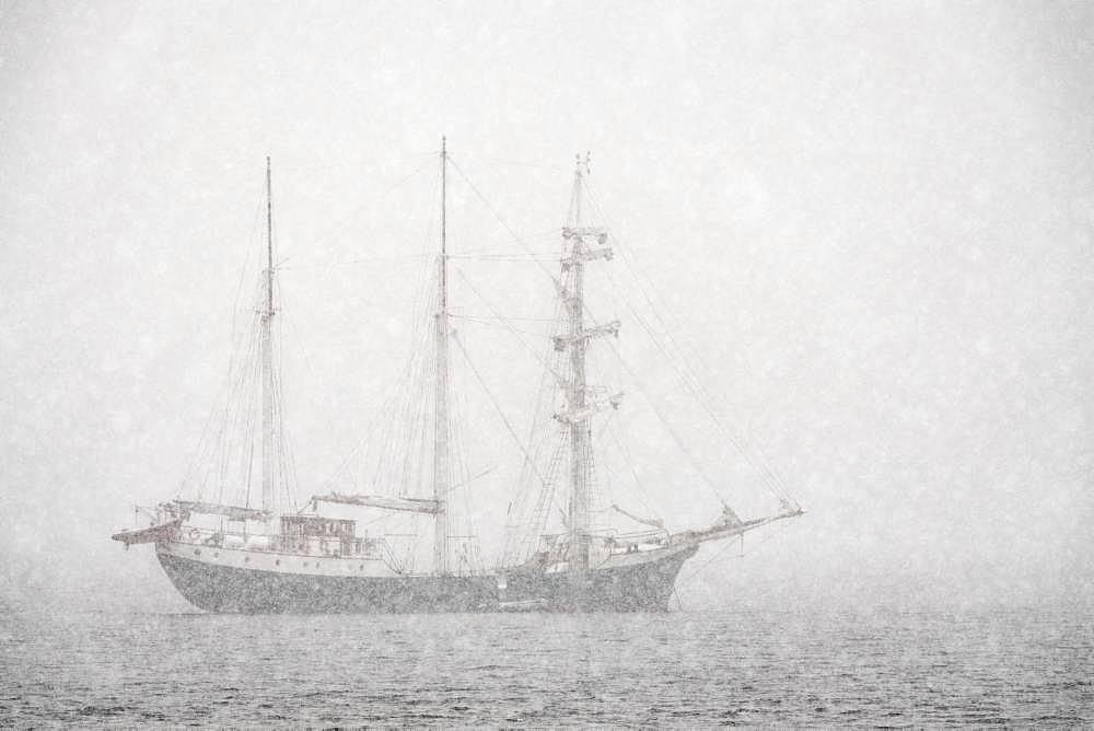 Barkentine Antigua in the snow drift, Snaddvika, Murchisonfjord, Nordaustland, Spitsbergen Archipelago, Svalbard and Jan Mayen, Norway, Europe - 832-384751