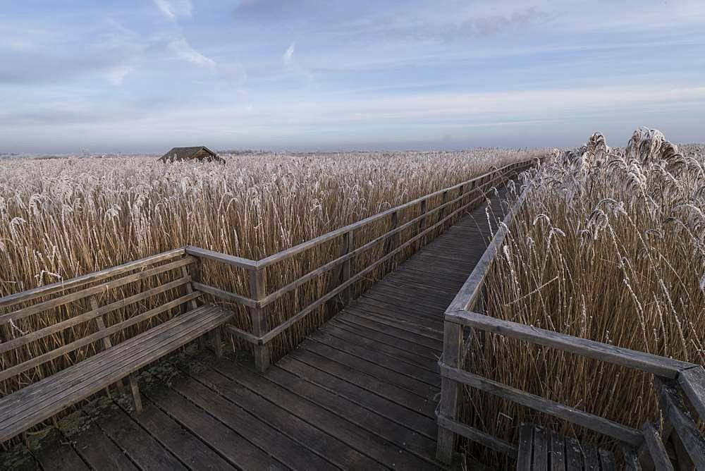 Wooden footbridge in winter, hoarfrost, Federsee lake nature reserve, Bad Buchau, Baden-Wuerttemberg, Germany, Europe
