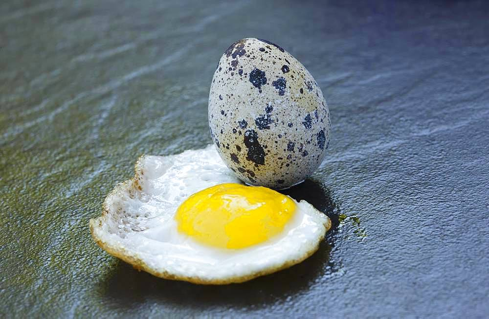 Quail egg and fried egg, Germany, Europe
