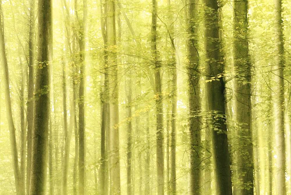 Deciduous forest in autumn, abstract, impressionistic, Saxony-Anhalt, Germany, Europe