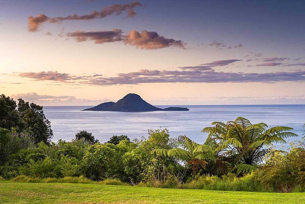 Volcano Island White Island from the mainland with palm trees, sunset, Whakaari, Volcano Island, Bay of Plenty, North Island, New Zealand, Oceania