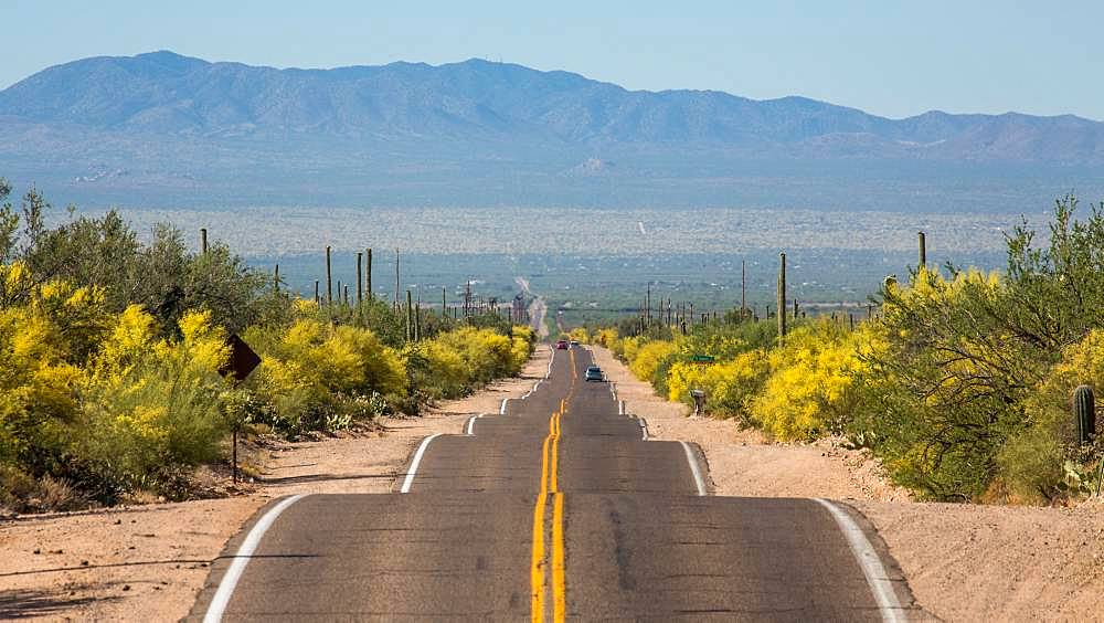Long straight road through Sonora Desert, Tucson, Arizona, USA, North America