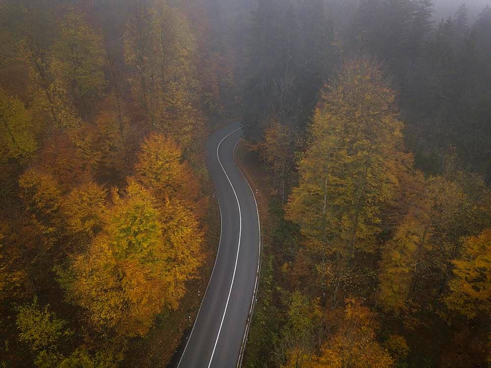 Drone shot, country road from above through autumn forest with fog, yellow foliage, Mittenwald, Upper Bavaria, Bavaria, Germany, Europe