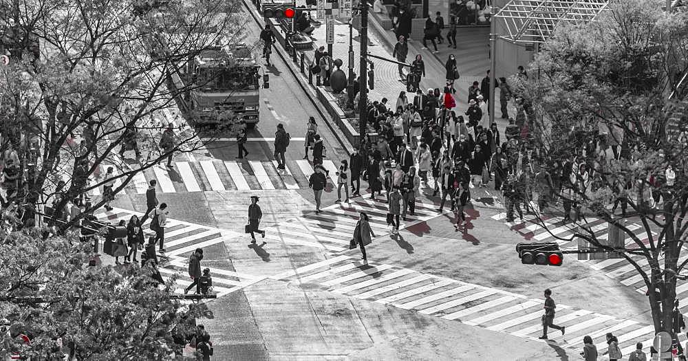 Shibuya crossing, crowds at intersection, many people cross zebra crossing, red traffic light, black and white, Shibuya, Udagawacho, Tokyo, Japan, Asia