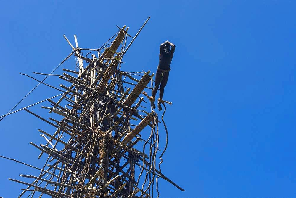 Man jumping from a bamboo tower, Pentecost land diving, Pentecost, Vanuatu, Oceania - 832-385789