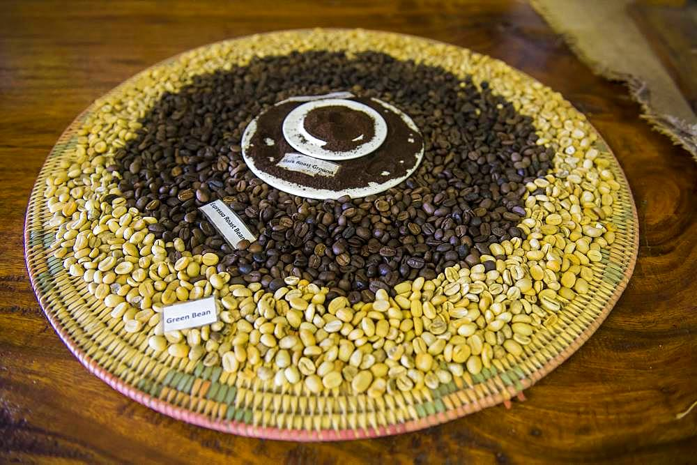 Green and roasted fresh coffee beans, Tanna coffee factory, Port Vila, Vanuatu, Oceania