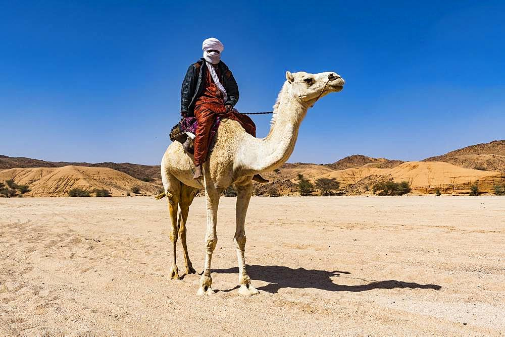 Tuareg riding on his arabian camel, near Tamanrasset, Algeria, Africa