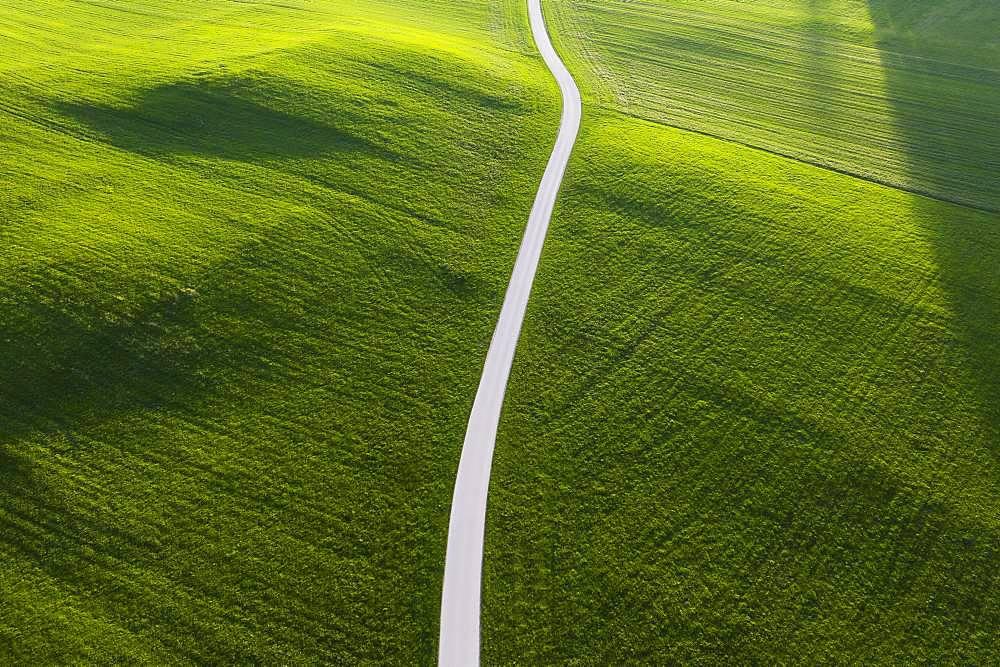 Road through meadow in the morning light, near Muensing, Upper Bavaria, Bavaria, Germany, Europe