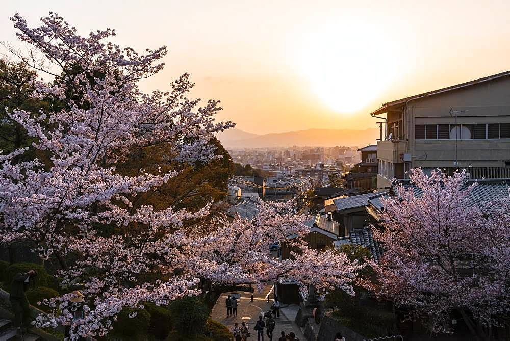 Dusk, view over Tokyo with blossoming cherry trees, Kyoto, Japan, Asia