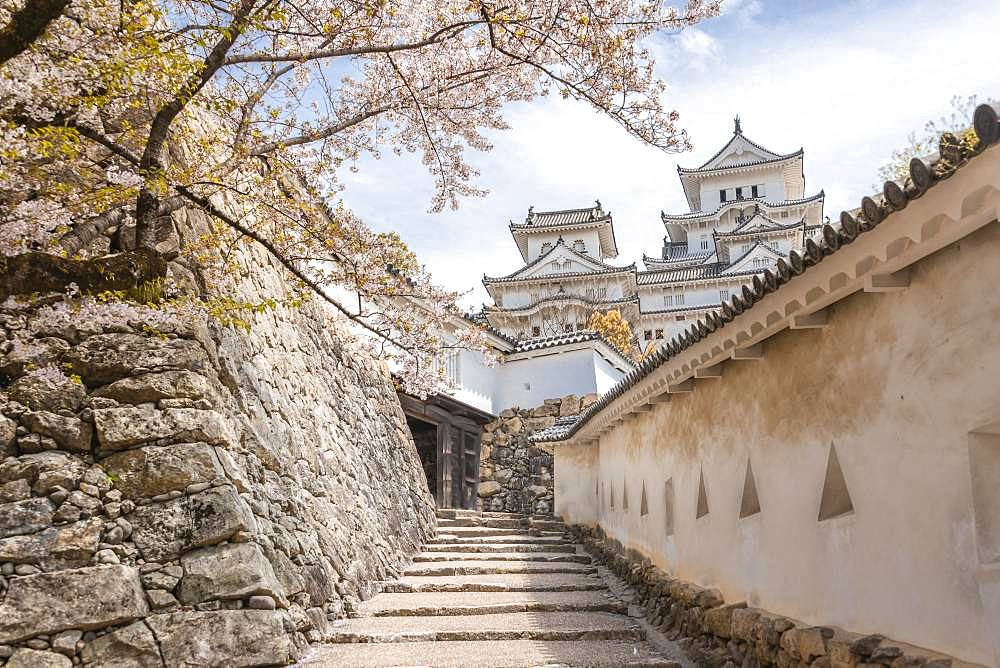 Weir walk at a wall of the castle Himeji, Himeji-jo, Shirasagijo or white heron castle, cherry blossom, Himeji, prefecture Hyogo, Japan, Asia
