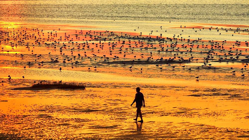 Walkers and seagulls, silhouettes on the beach, evening mood at sunset, Duhnen, Cuxhaven, Lower Saxony, Germany, Europe