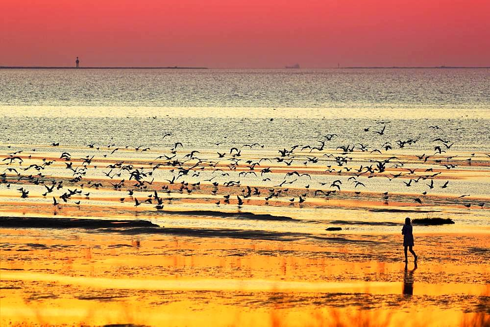Orange-red sunset over the North Sea, walker and seagulls, silhouettes on the beach, Duhnen, Cuxhaven, Lower Saxony, Germany, Europe
