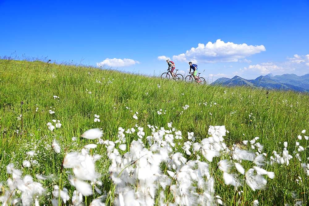 Mountain bikers on the south side of the Hohe Salve, Hopfgarten, Kitzbuehel Alps, Tyrol, Austria, Europe