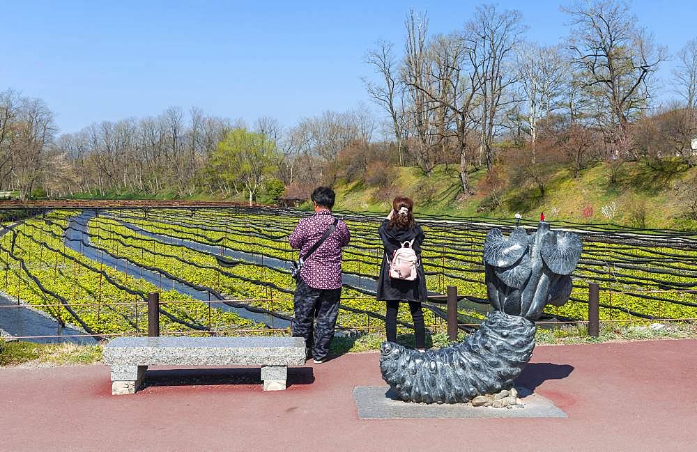 Tourists stand in front of field, Wasabi cultivation, Daio Wasabi Farm, Nagano, Japan, Asia - 832-386284