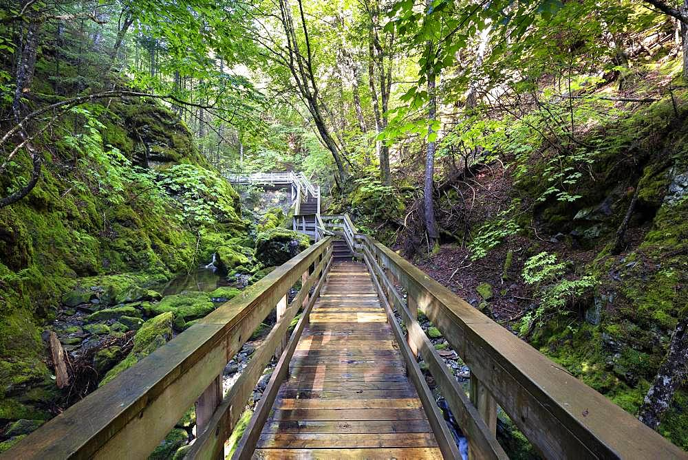 Hiking trail, wooden footbridge leads through a gorge, Fundy National Park, near Alma, New Brunswick, Canada, North America
