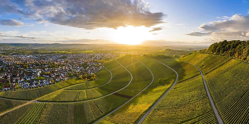 Drone shot, autumn, vineyards at Korber Kopf, Remstal near Schnait, Baden-Wuerttemberg, Germany, Europe