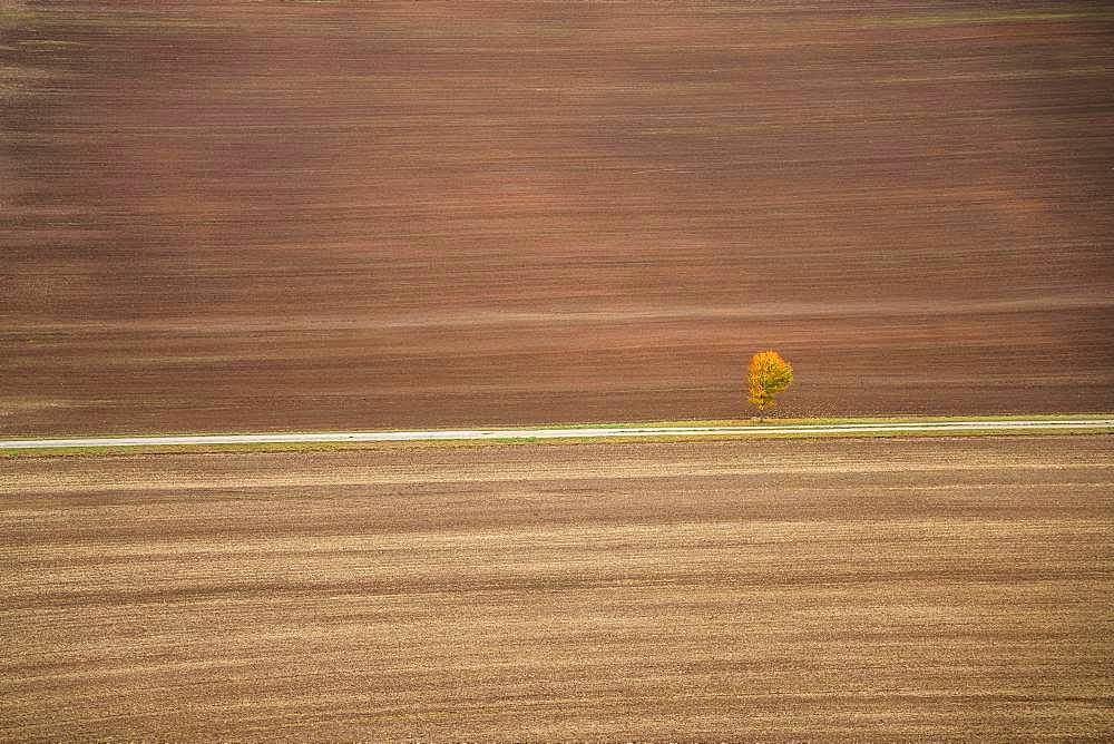Freshly ploughed field and lonely tree in autumn, Creuzburg, Wartburgkreis, Thuringia, Germany, Europe