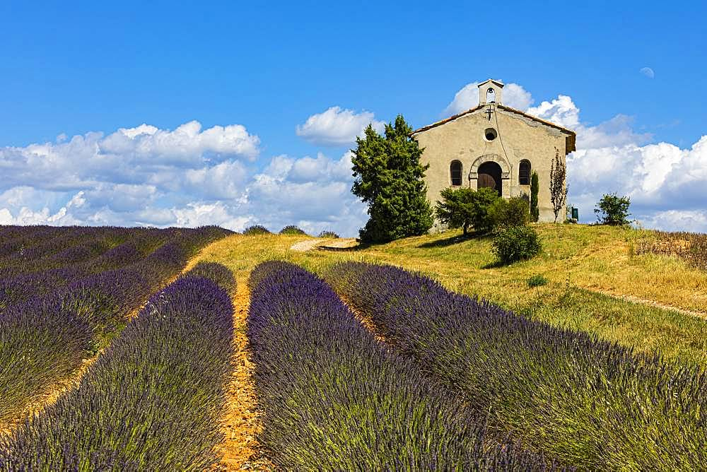 Lavender field and chapel near Entrevennes, Provence, Haute-Provence, Southern France, France, Europe