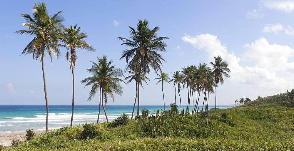 Playas de Este, palm trees, beach sea, Havana, Cuba, Central America