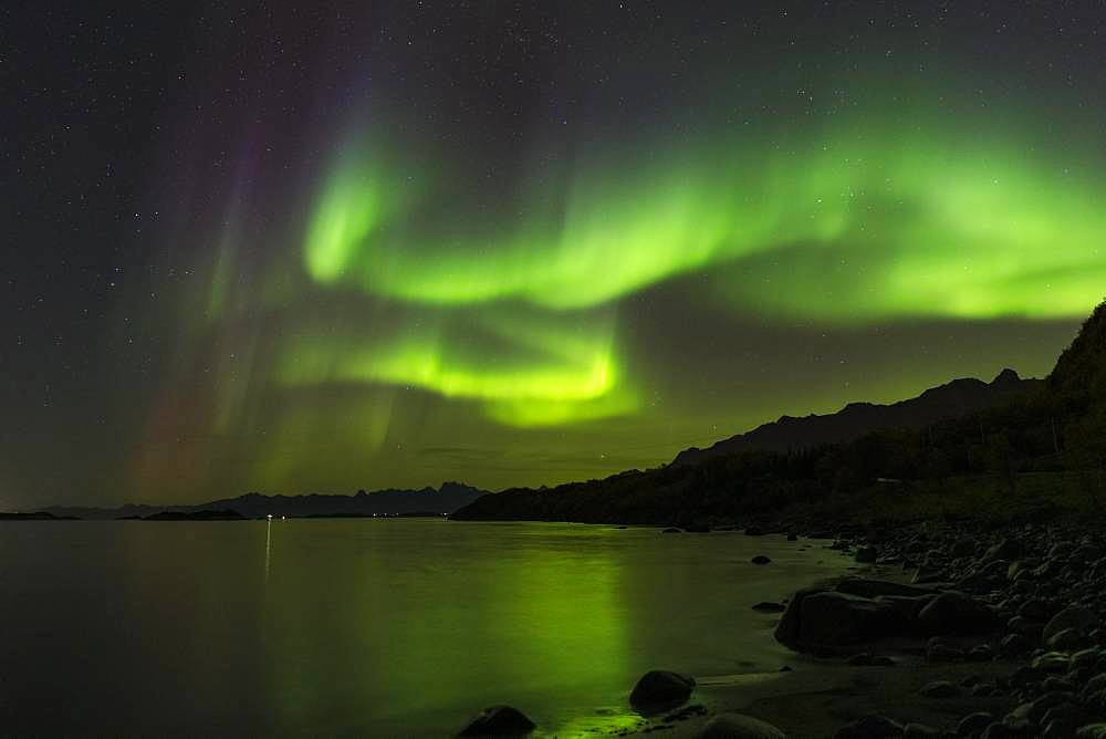Northern Lights (Aurora borealis), near Stronstad, Lofoten, Norway, Europe