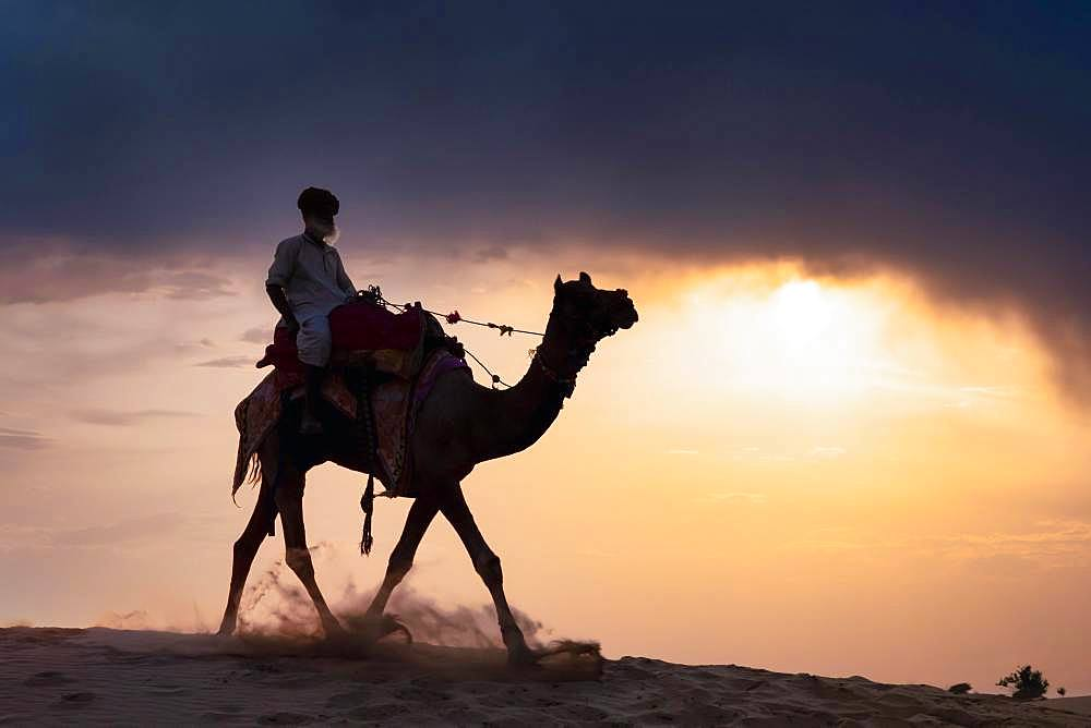 Elderly man riding on a camel in the Thar desert at sunset, Rajasthan, India, Asia