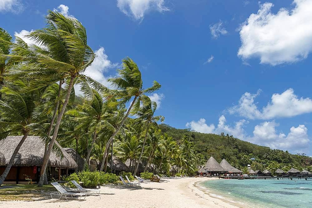 Bungalows on a sandy beach with palm trees, Marara Beach, Bora Bora, French Polynesia, Oceania