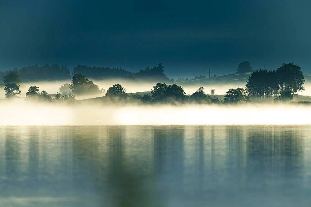Lake Forggensee with small group of trees in fog, Fuessen, Swabia, Bavaria, Germany, Europe