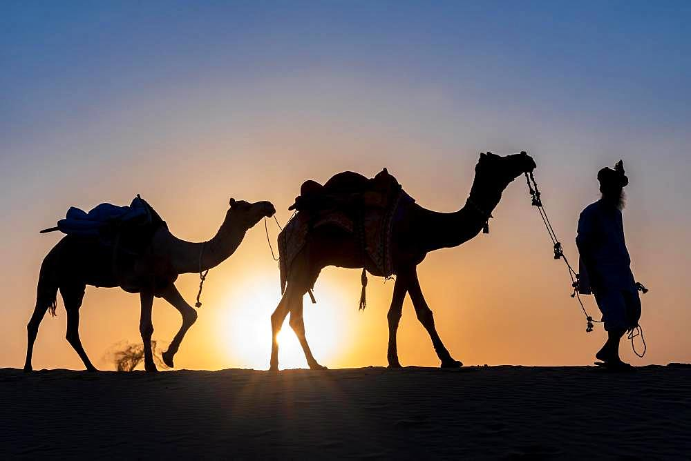 Silhouette of a man walking with his camels, Thar desert, Rajasthan, India, Asia