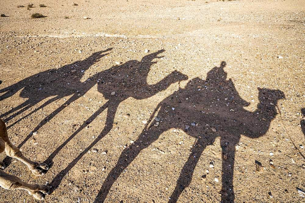Shadows of dromedaries (Camelus dromedarius) caravan on the desert Agafay, Marrakech, Morocco, Africa