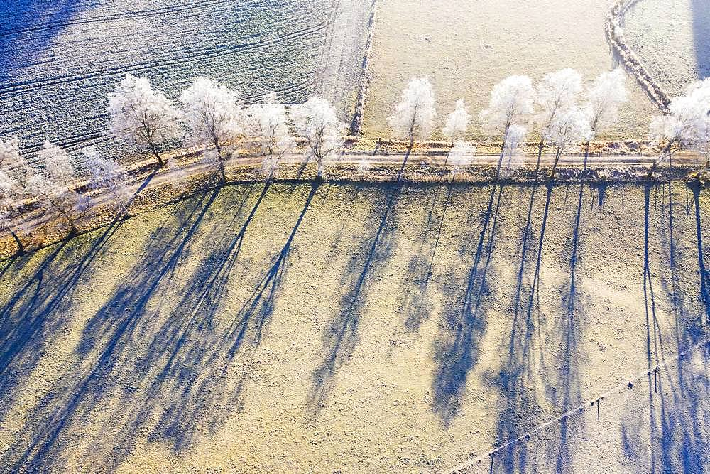 Field path through birch avenue with hoarfrost, Schwaigwall, near Geretsried, drone shot, Upper Bavaria, Bavaria, Germany, Europe