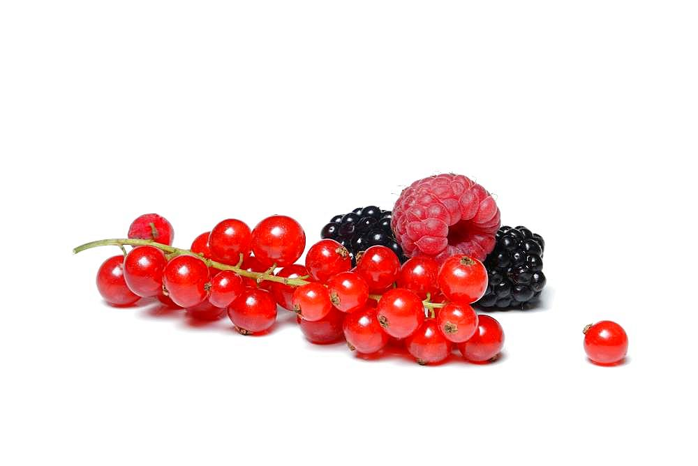 Red currants, blackberries and raspberries, Germany, Europe