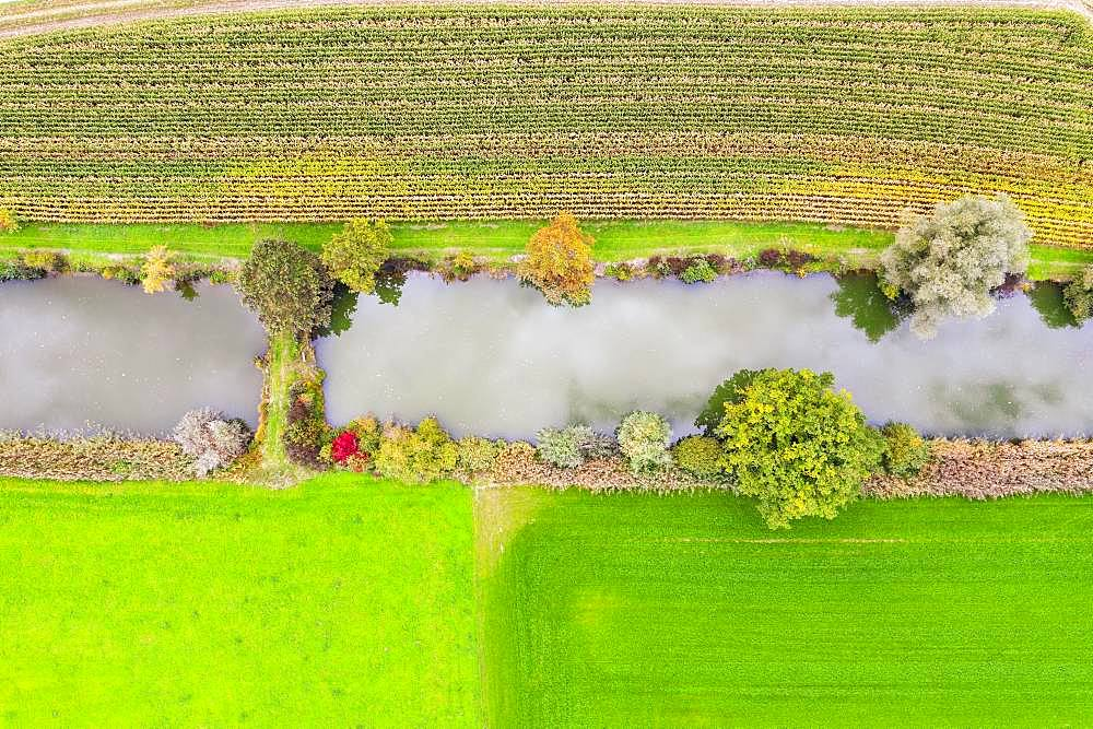 Fish ponds between cornfield and meadows from above, near Uebersee, Chiemgau, aerial view, Upper Bavaria, Bavaria, Germany, Europe