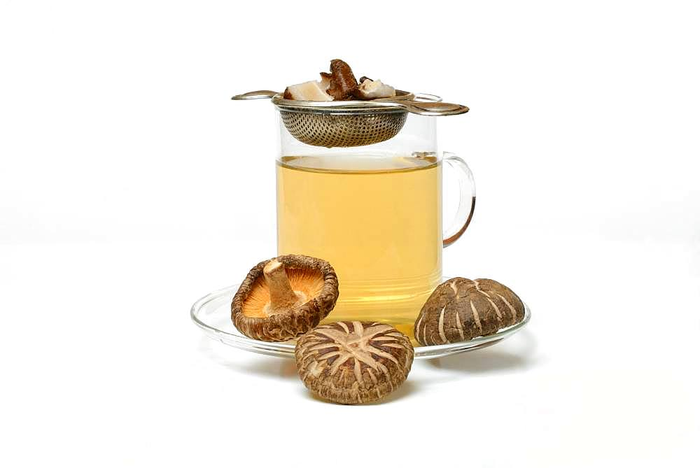 Shiitake tea in tea glass with tea strainer and shiitake mushrooms, Germany, Europe