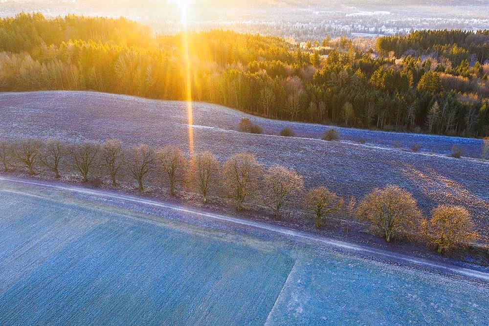 Alley through field and meadow with hoarfrost at sunrise, near Icking, drone shot, Upper Bavaria, Bavaria, Germany, Europe