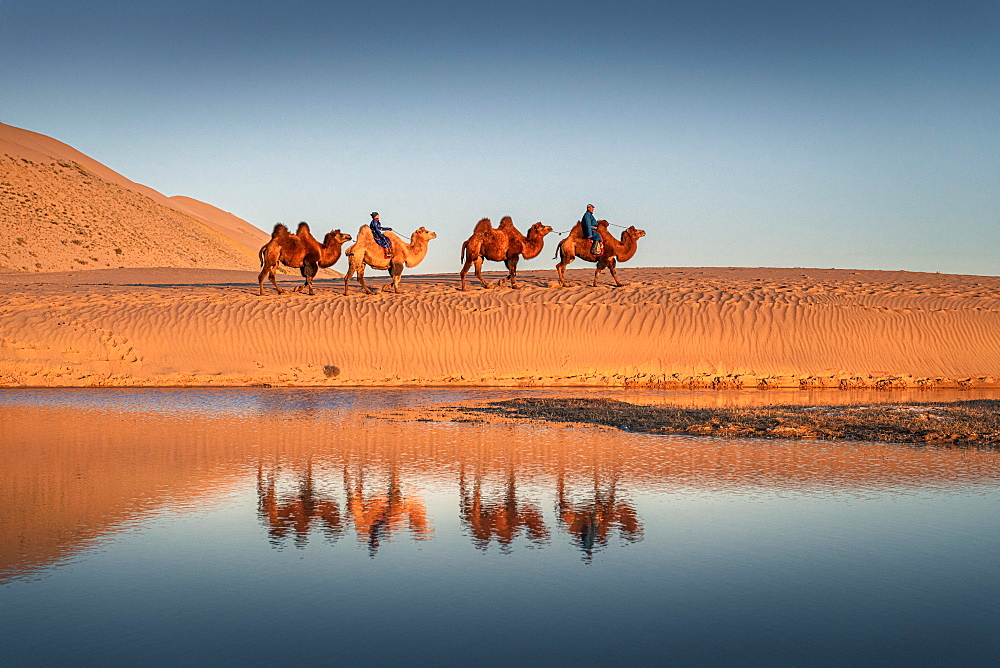 Caravan, nomads ride on Bactrian camels (Camelus bactrianus) through the Gobi desert, reflection in water, Oemnoe-Gobi-Aimag, Mongolia, Asia