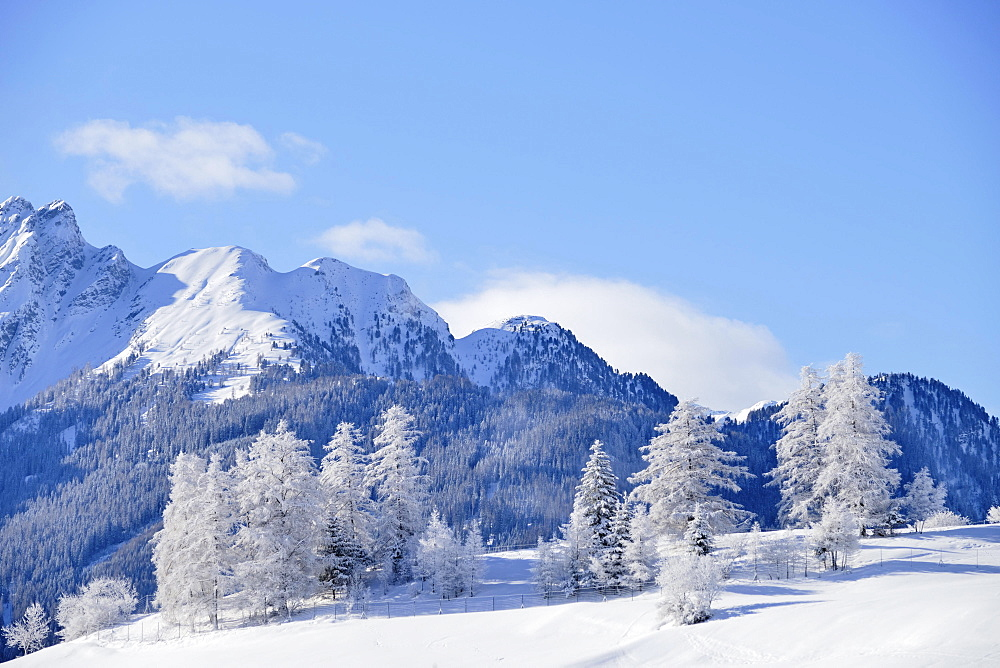 Winter landscape, snow-covered larches in front of mountains, Ladis, ski resort Serfaus Fiss Ladis, Tyrol, Austria, Europe