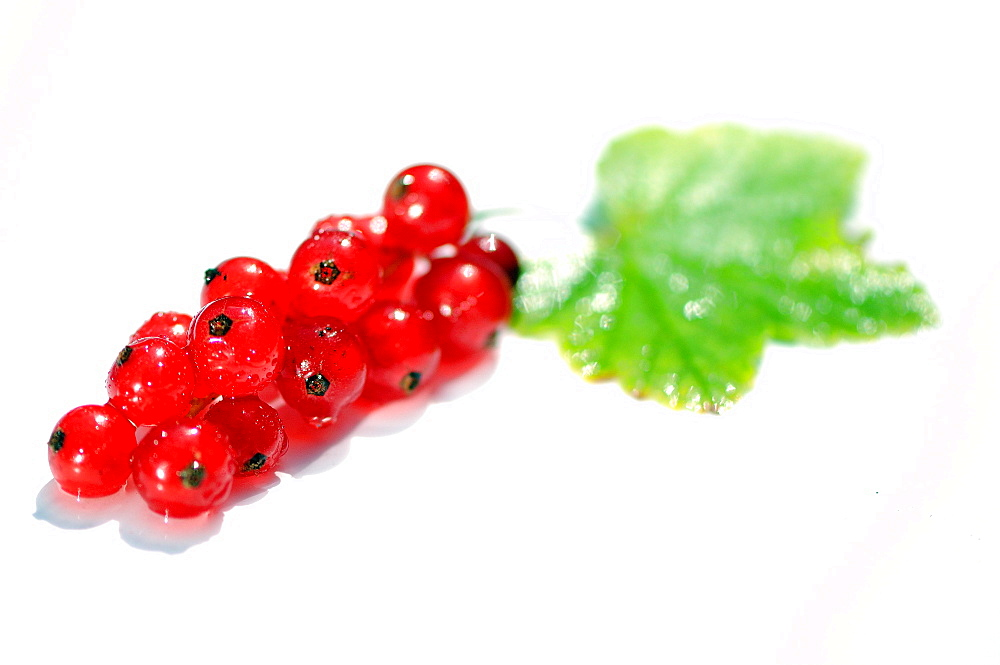 Red Currant, food photography, studo shot, white background, Germany, Europe
