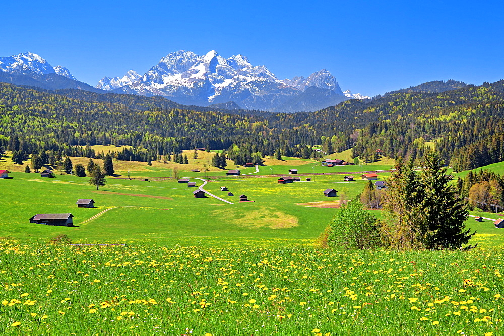 Spring landscape with Zugspitze massif in the Wetterstein range, Kruen, Werdenfelser Land, Upper Bavaria, Bavaria, Germany, Europe