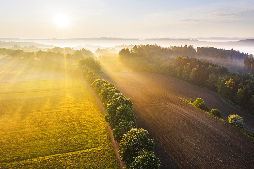 Cultural landscape with fog in morning light, near Icking, Toelzer Land, drone shot, Upper Bavaria, Bavaria, Germany, Europe