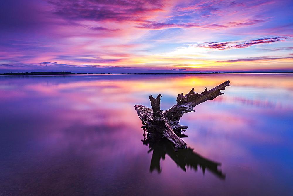 Tree trunk in water, sunset, backwater, Usedom, Mecklenburg-Western Pomerania, Germany, Europe - 832-388143
