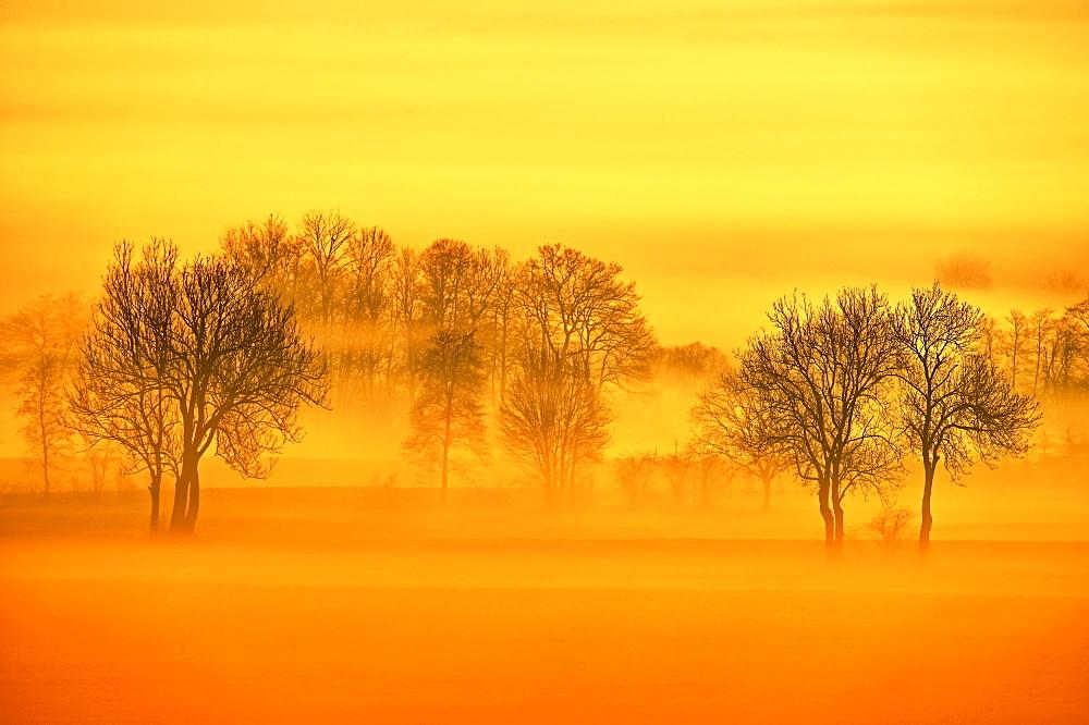 Meadows and trees in early fog, Reusstal, Aristau, Canton Aargau, Switzerland, Europe