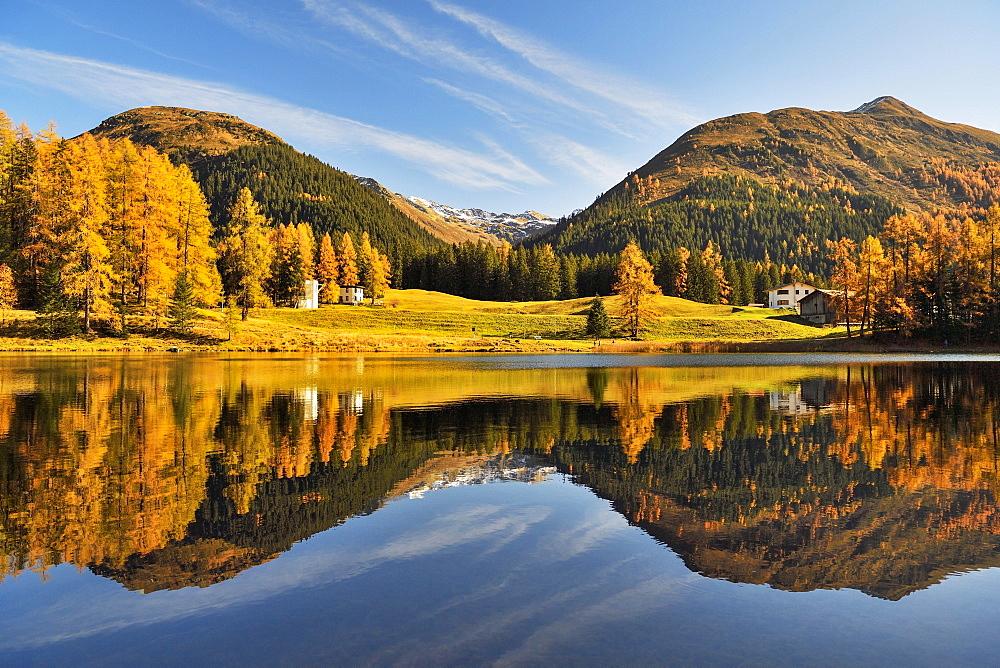 Autumnally discoloured larch forest reflected in Schwarzsee, Laret, Davos, Canton Graubuenden, Switzerland, Europe