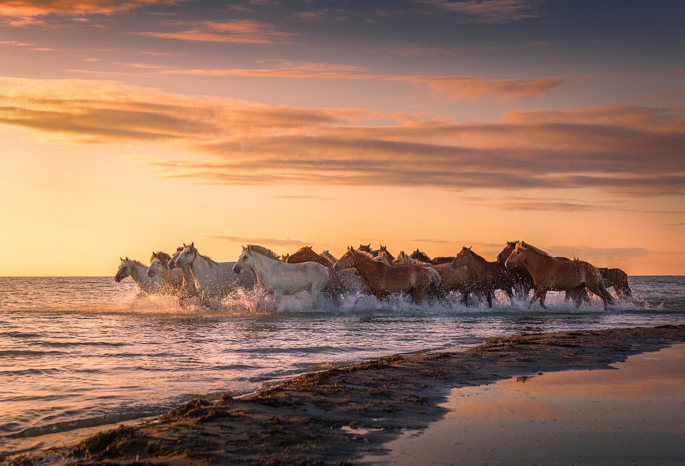 Horses running through the water, shore of lake Buir Nur, Dornod-Aimag, Mongolia, Asia