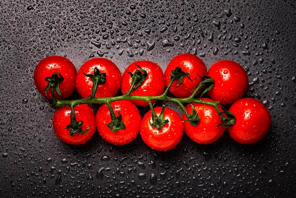 Cherry tomatoes with drops of water, black background, studio shot, Austria, Europe