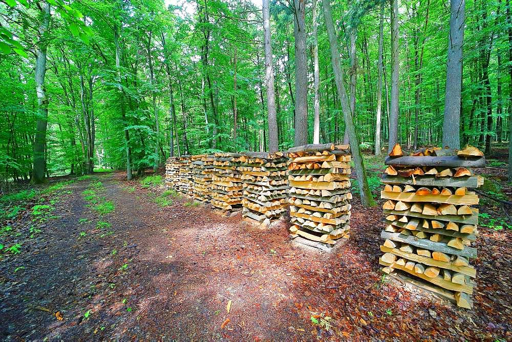 Mounted firewood, meter wood in the forest, Solms, Hesse, Germany, Europe
