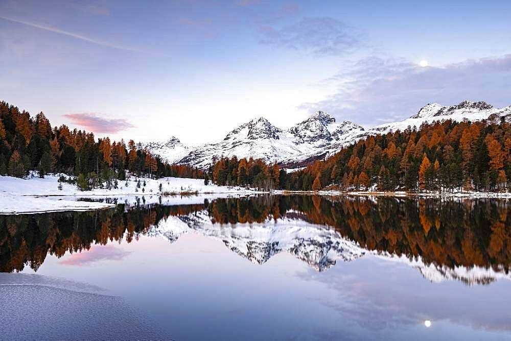 Autumnal larches with snow-covered mountain peaks are reflected in Lake Staz, Lej da Staz, St. Moritz, Engadin, Grisons, Switzerland, Europe - 832-389564