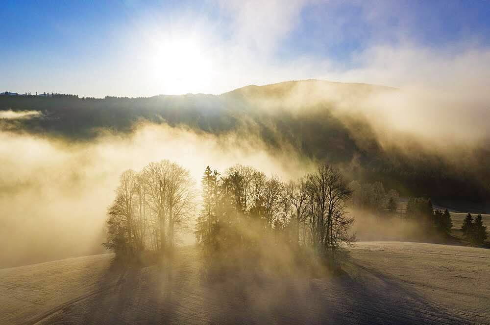 Group of trees rising out of the sea of fog, inversion weather, drone shot, aerial view, Mondseeland, Salzkammergut, Upper Austria, Austria, Europe - 832-389623